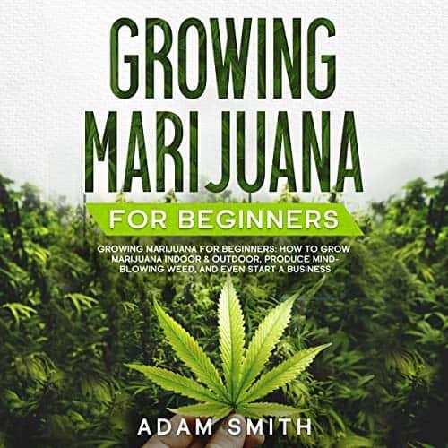 Growing-Marijuana-for-Beginners